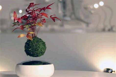 floating air bonsai garden  hoshinchu seemingly defies