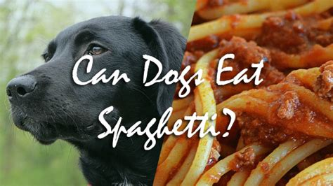 can dogs eat spaghetti pet consider pet authority