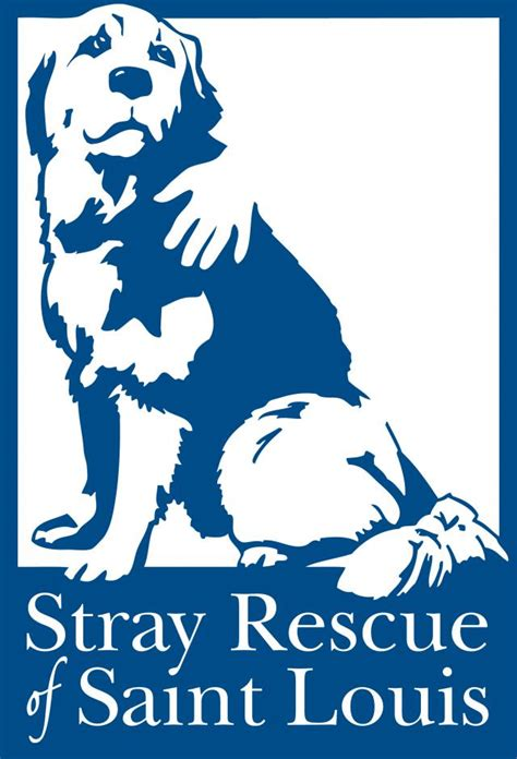 puppy adoption st louis here s how to help stray rescue