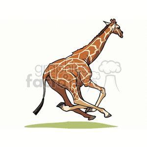 running giraffe clipart royalty  gif jpg wmf