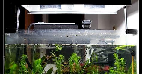 Tabung Oksigen Untuk Ikan Hias Sinar Lu Untuk Akuarium Aquascape Akuarium Ikan Hias