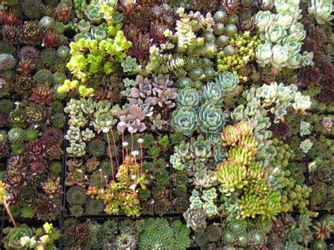 living wall gardens espores comenzar la casa por el tejado