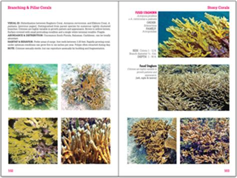 coral reefs maldives reef id books books reef coral identification new 3rd edition florida