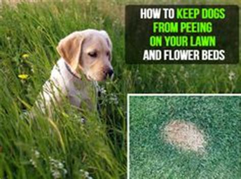 how to keep dogs lawn no pets allowed on grass ugh so yucky land mines every where and the