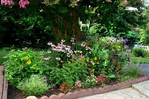 plant bed flowers and nature in my garden flower beds