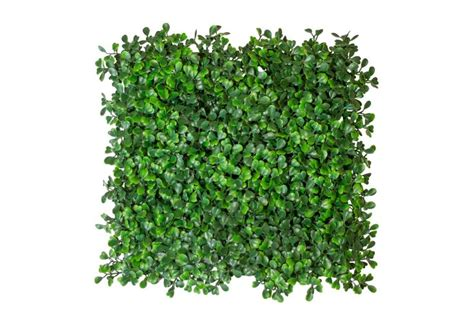 can coyotes see green light the 98 best images about artificial boxwood on