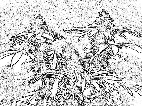 weed leaf coloring page free coloring pages of weed leaf