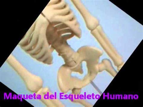 como hacer una maqueta del esqueleto humano maqueta esqueleto youtube