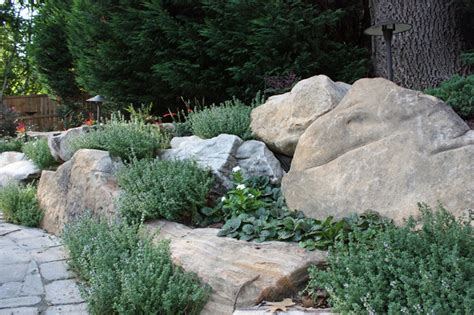 natural boulder wall with lemon scented thyme and catlin s giant ajuga traditional landscape