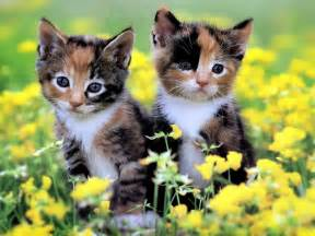 fascinating articles and cool stuff cute kittens wallpapers