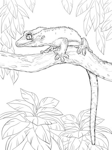 leopard gecko draw by pictures coloring pages