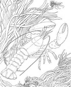 crawdad crayfish coloring page super coloring
