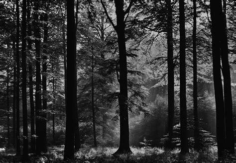 black and white woodland wallpaper fototapete wald schwarz wei 223 tapete fototapete natur