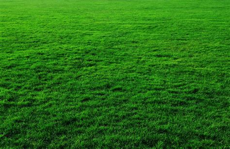 artificial turf versus real grass in colorado