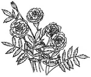 Flower image gallery learn how to draw a marigold with our step by