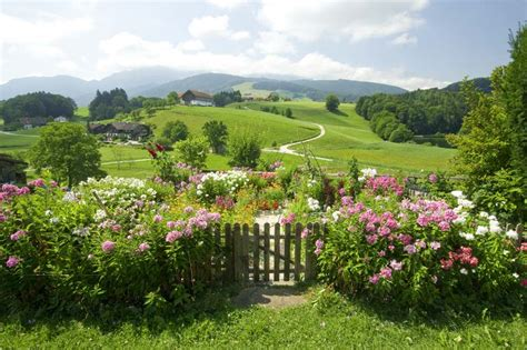 blumen garten - Pflegeleichte Blumen Garten