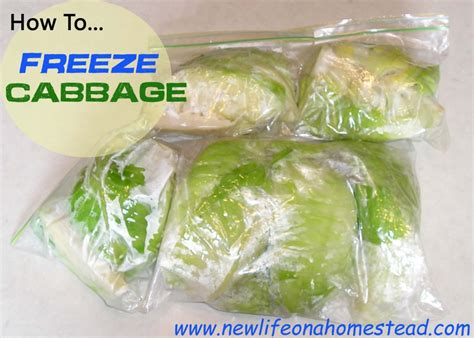 best way to freeze soup how to freeze cabbage new life on a homestead