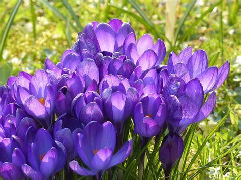 fiori da piantare in autunno bulbi da piantare in autunno i pi 249 adatti per fiori