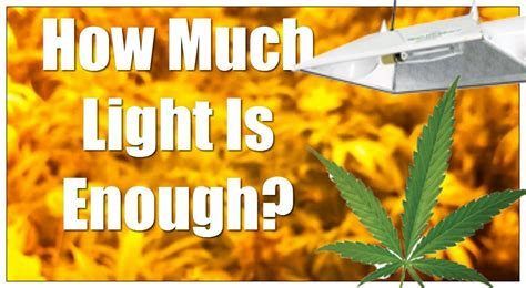 Cannabis Lighting Distance Question How Much Light Is Enough? YouTube