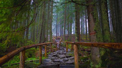 The Path the path to morskie oko tatra national park poland