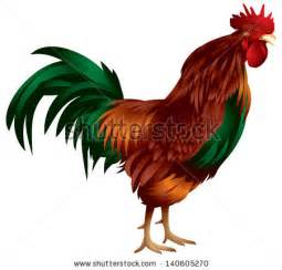rooster colors rooster crowing stock photos images pictures