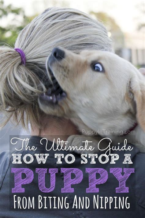 stopping a puppy from biting the ultimate guide how to stop a puppy from biting and