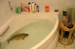 fish in a bath tub cat pictures