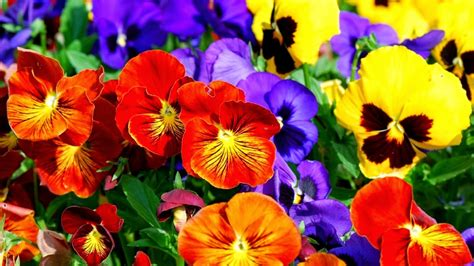 colorful flowers background wallpapers many flowers