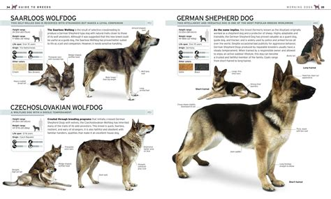 aggressive breeds list for apartments breeds list with pictures pdf wallpaper sportstle