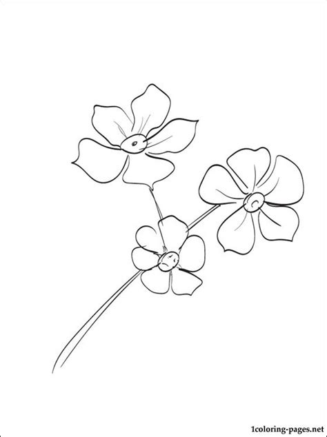 coloring book not free free coloring pages of forget me