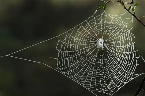 web house home cleaning get rid of house spiders www tidyhouse info