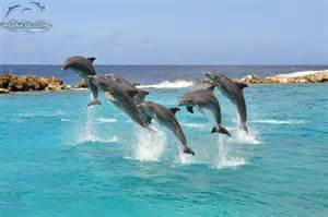 file dolphin show jpg wikimedia commons