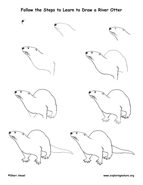 How To Draw A Sea Otter