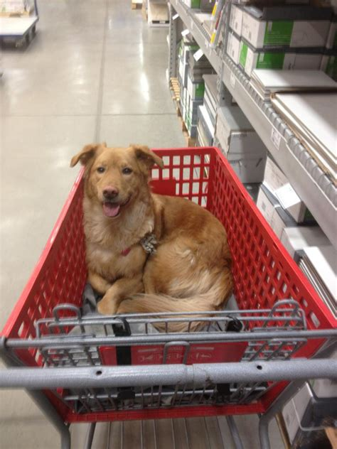 are dogs allowed in lowes larry and i went to lowes larry lowes aww