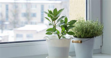 cuidados de las plantas de interior cuidados de las plantas de interior en invierno