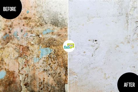 how to get rid of mold in house how to get rid of mold and mildew we tested 5 methods