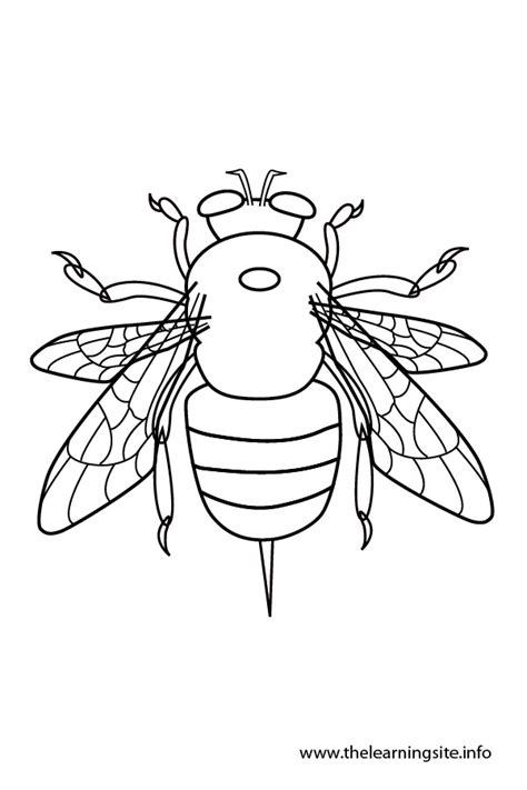 Cake Decorating Worksheets Free Coloring Pages Of Cbbc Tracy Beaker