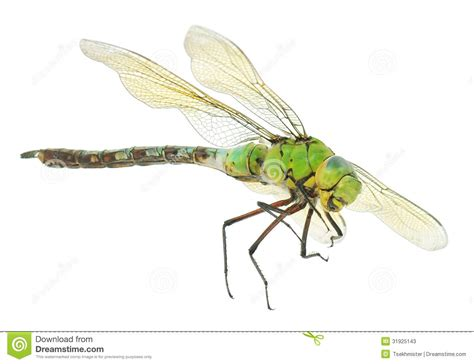 dragonfly stock image image of insects striped flying