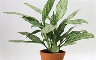 indoor plant 8 super cute indoor plants to buy right now gold coast