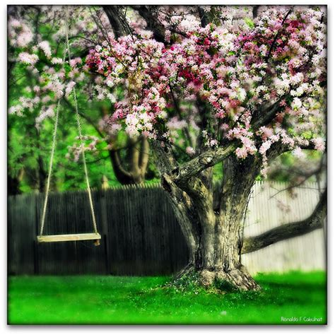 tree swing photography the peaceful tree flickr photo sharing