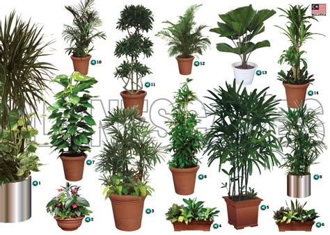 Live Indoor Plants | live indoor plant rental and service malaysia preserved