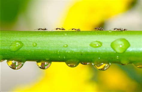 ants in backyard ants in the bee yard keeping backyard bees