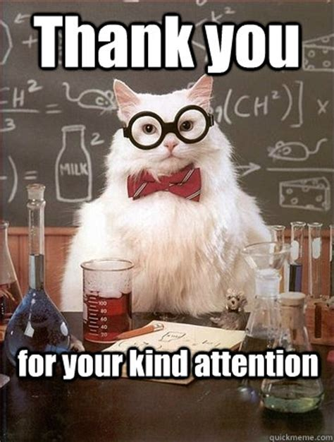 Thank You Funny Meme - cat thanks for your attention