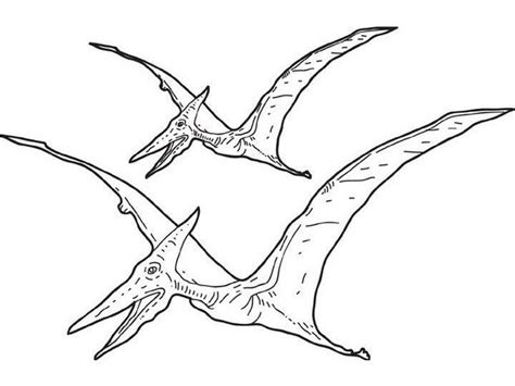 Dinosaur Pterodactyl Drawing Pterodactyl Coloring Pages