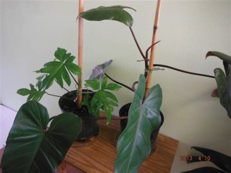 plant sale  weeks hours    exotica