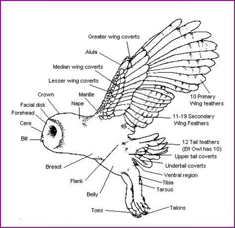 barn owl food web diagram the world s catalog of ideas