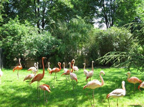 Délicieux Plantes Et Jardins Com Serres #4: flamants-jardin-plantes-paris-menagerie-espece-animaux-oiseaux.jpeg