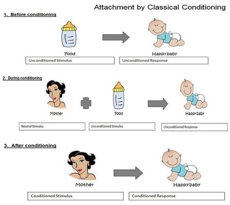 classical conditioning in humans harry harlow did a