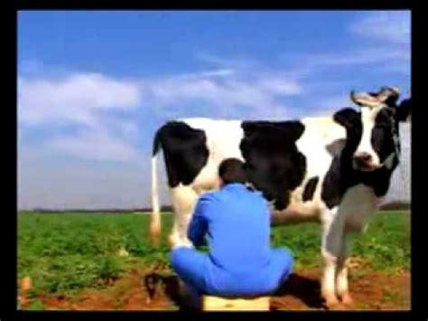 Syiria Hana syrian commercial hana farms milk cheese by jwt syria