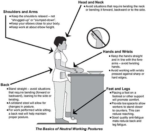 kitchen layout ergonomics ergonomic kitchen counter height google search kitchen